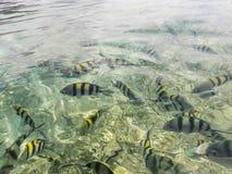 Vissen op waterspiegel Stock Foto