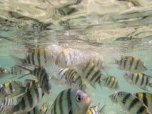 Vissen op zandige zeebedding Stock Foto