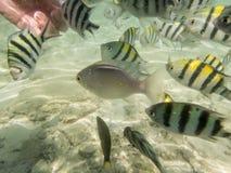 Vissen op zandige zeebedding Stock Foto's