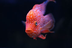 Vissen op zwarte achtergrond royalty-vrije stock afbeelding