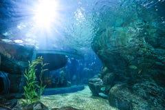 Vissen in overzeese Aquariumtank met licht vanaf de bovenkant Royalty-vrije Stock Afbeelding