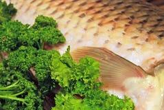 Vissen in peterselie Royalty-vrije Stock Afbeelding