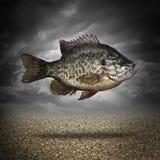 Vissen uit water Royalty-vrije Stock Fotografie