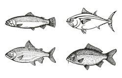 Vissen van de overzeese en rivier vastgestelde schetsvector Stock Foto