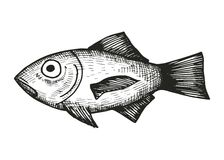 Vissen van de overzeese schets Stock Fotografie