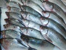 Vissen/Verse vissen bij de markt ijsgekoelde stokvissen op een vis Op Royalty-vrije Stock Afbeeldingen