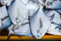 Vissen in verse zeevruchtenmarkt Stock Afbeelding