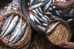 Vissen in Vietnamese stijl Stock Afbeelding