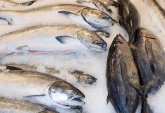 Vissen voor verkoop stock afbeeldingen