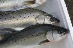 Vissen voor Verkoop royalty-vrije stock afbeeldingen