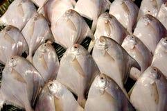 Vissen voor verkoop. stock fotografie