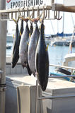 Vissen voor verkoop bij de werf in Maui, Hawaï Stock Foto