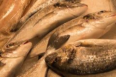 Vissen voor verkoop in Hongkong Royalty-vrije Stock Foto's
