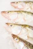 Vissen voor verkoop op ijs Stock Foto's