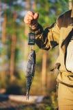 Vissen Wegingen Royalty-vrije Stock Afbeelding