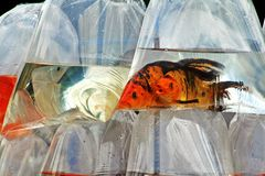 Vissen in zakken Stock Afbeelding