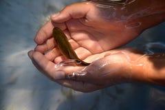 Vissen in zijn handen 2 Stock Afbeeldingen