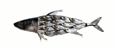 Vissencollage Stock Afbeelding