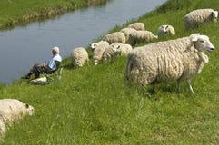 Vissende oudste en kudde van schapen stock afbeelding