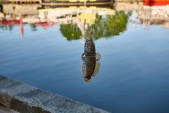 Vissengoby op een haak royalty-vrije stock foto