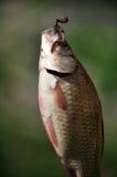 Vissenhaak en bait_4 Royalty-vrije Stock Afbeeldingen