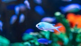 Vissenhuisdier in Glaskom stock afbeelding