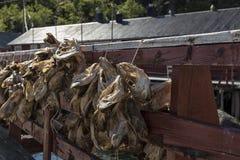 Vissenlijn Royalty-vrije Stock Afbeelding