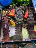 Vissenmarkt, Alona Beach, Panglao Filippijnen Royalty-vrije Stock Afbeelding