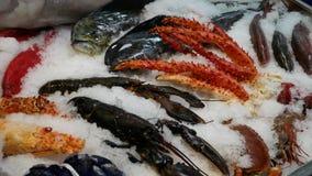 Vissenmarkt - diverse soorten vissen en weekdieren stock footage