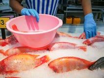 Vissenmarkt, Voedsel Royalty-vrije Stock Afbeelding