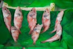 Vissenmarkt & Zeevruchten: Istanboel, Bosphorus Stock Foto's