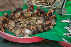 Vissenmarkt & Zeevruchten: Istanboel, Bosphorus Stock Afbeeldingen