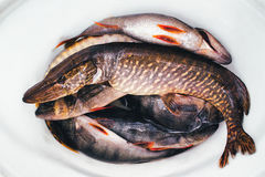 Vissenpak Stock Foto's