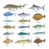 Vissenreeks Inzameling van de aquatische fauna vector illustratie