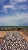 Vissenstrook droog op de stranden van Sri Lanka Royalty-vrije Stock Fotografie