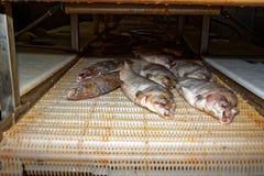 Vissenverwerking, vissenfabriek stock afbeelding