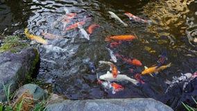Vissenvijver in een heet de lentehotel, Fukuoka stock afbeeldingen