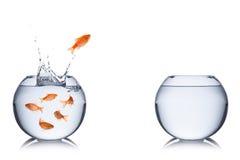 Vissenvlucht stock afbeelding