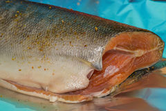 Vissenvoedsel stock fotografie