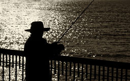 Visser Alone op een Pijler Stock Fotografie