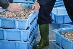 De vissendozen van Prepairing voor de markt Stock Afbeeldingen