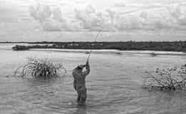 Visser die een bonefish in mangroven spelen stock foto