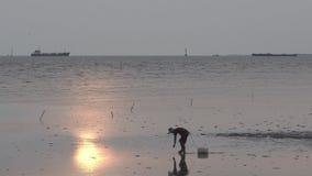 Visser die op mudflats lopen om een krab te vangen stock footage