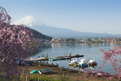 Visser en Fujisan in Kawaguchiko Royalty-vrije Stock Afbeeldingen