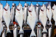 Visserij in Alaska Royalty-vrije Stock Afbeelding