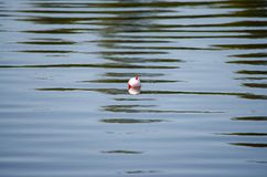 Visserij Bobber die op het Water drijven stock afbeeldingen