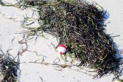 Visserij bobber op het zand in het zeewier Stock Foto's