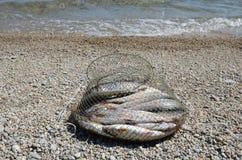 Visserij corf met vangst van het grayling van Baikal op de kust dichtbij het water Stock Foto's