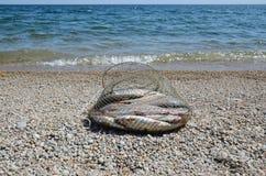 Visserij corf met vangst van het grayling van Baikal op de kust dichtbij het water Stock Foto