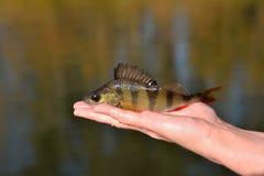 Visserij Een toppositie ter beschikking tegen een achtergrond van water op een sunn stock afbeeldingen
